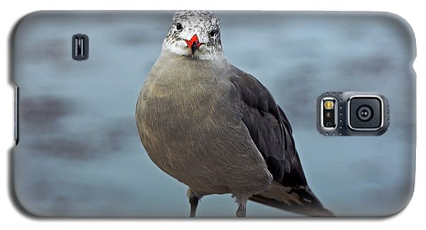 Heermann's Gull Looking At Camera Galaxy S5 Case