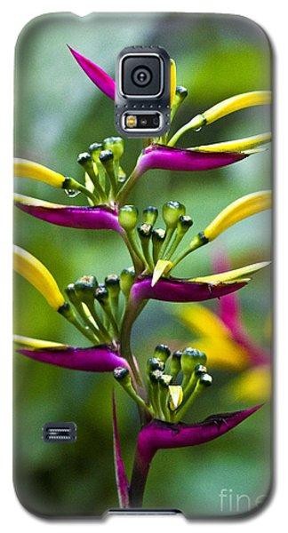 Heliconia Subulata II Galaxy S5 Case