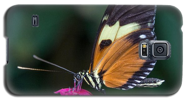 Heliconius Ismenius Galaxy S5 Case