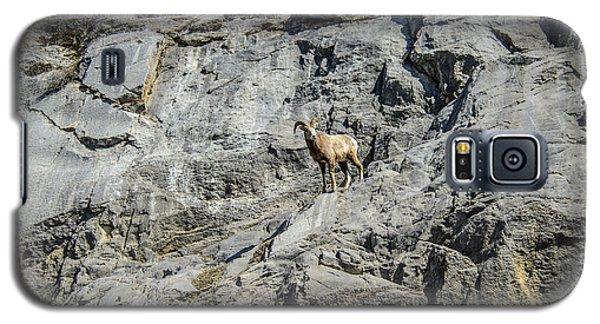 Big Horn Sheep Coming Down The Mountain  Galaxy S5 Case