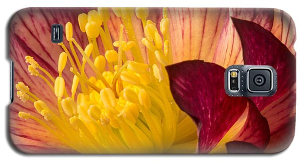 Hellebore Ruby Yellow Glow Galaxy S5 Case