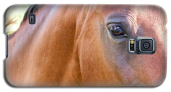 Galaxy S5 Case featuring the photograph Hello Beauty by Roselynne Broussard