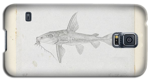 Catfish Galaxy S5 Case - Hemidoras Stenopeltis by Natural History Museum, London