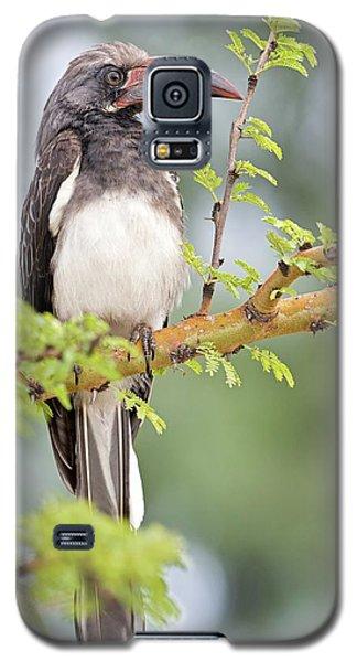 Hemprich's Hornbill Galaxy S5 Case