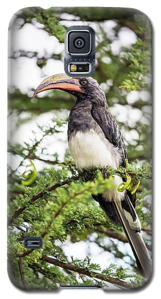 Hemprichs's Hornbill (tockus Hemprichii) Galaxy S5 Case