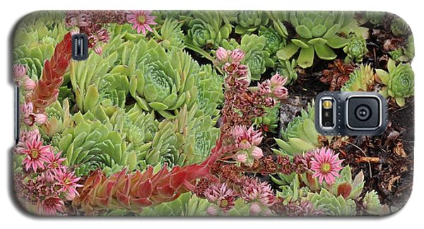 Hen And Chick In Bloom Galaxy S5 Case