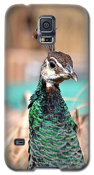Hen Galaxy S5 Case
