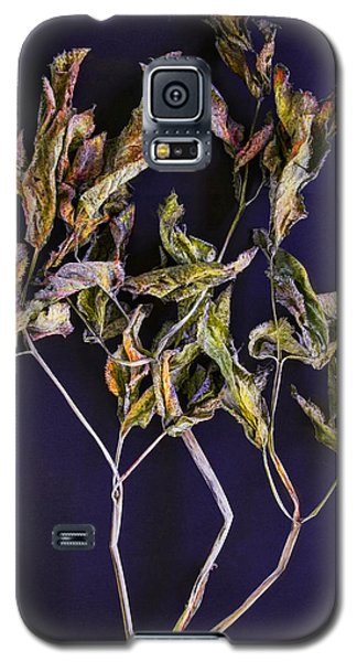 Galaxy S5 Case featuring the photograph Herbarium 1 by Vladimir Kholostykh