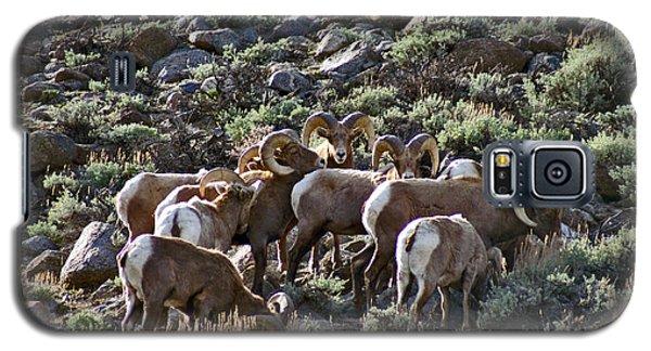 Herd Of Horns Galaxy S5 Case