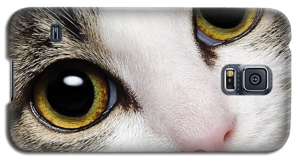 Here Kitty Kitty Close Up Galaxy S5 Case