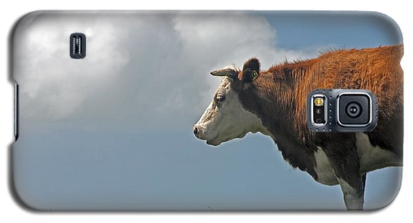 Galaxy S5 Case featuring the photograph Hereford Cow by Dennis Cox WorldViews