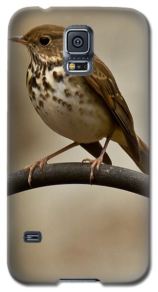Hermit Thrush Galaxy S5 Case