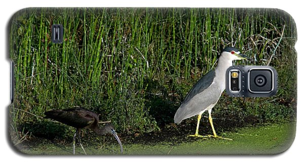 Heron And Ibis Galaxy S5 Case by Mark Newman
