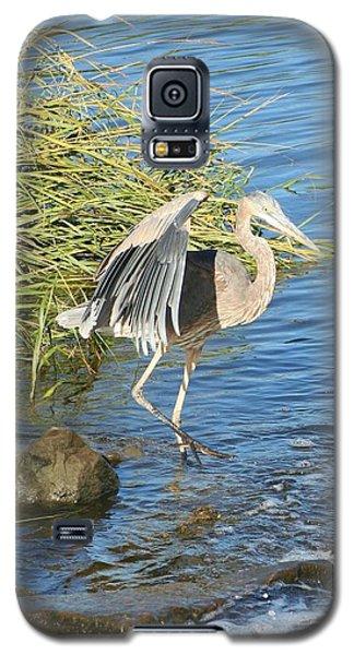 Heron Dance Galaxy S5 Case by Karen Silvestri
