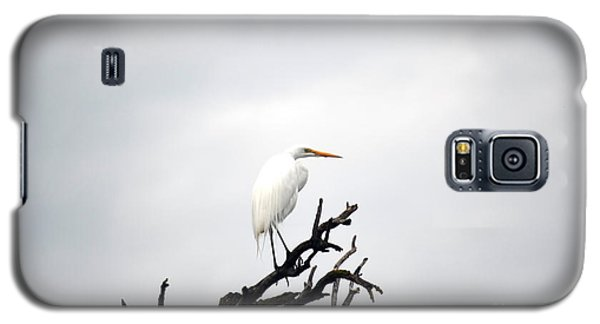 Heron On A Dead Tree Galaxy S5 Case