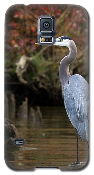 Galaxy S5 Case featuring the photograph Heron Perch by Alan Raasch