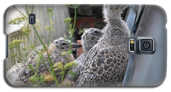 Herring Gull Chicks Galaxy S5 Case