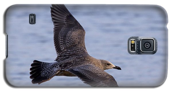 Galaxy S5 Case featuring the photograph Herring Gull In Flight Photo by Meg Rousher