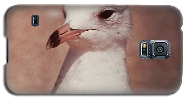Beach Gull On The Hunt Galaxy S5 Case by Belinda Lee