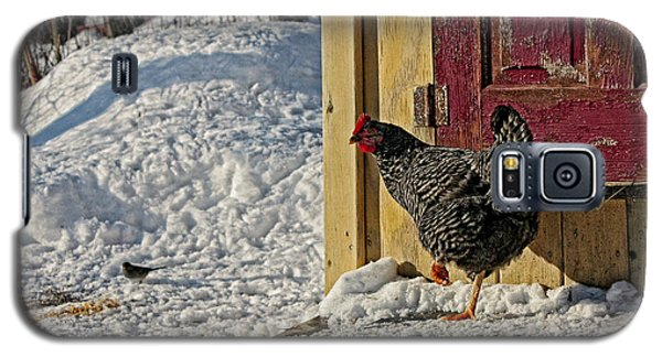 Galaxy S5 Case featuring the photograph Hey Are You Eating My Scratch by Denise Romano