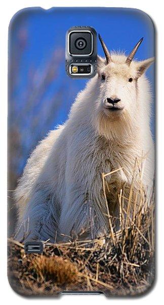 Hey Good Looking Galaxy S5 Case