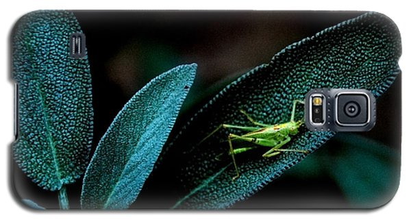Galaxy S5 Case featuring the photograph Hey  I'm Trying To Hide by Debra Fedchin