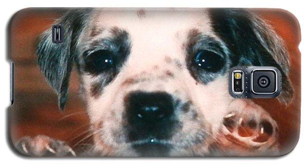Dalmatian Sweetpuppy Galaxy S5 Case