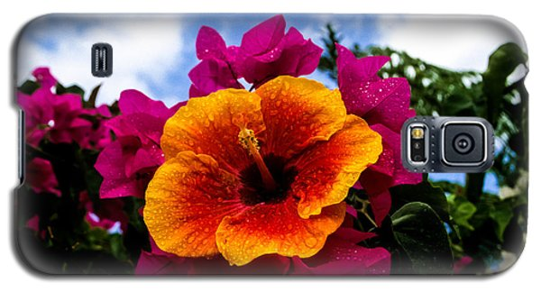 Hibiscus Beauty Galaxy S5 Case by Randy Sylvia