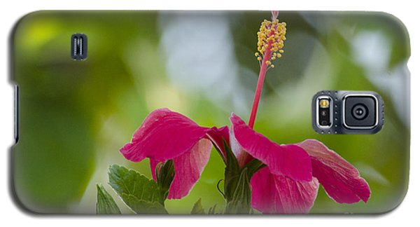 Hibiscus Blooming Galaxy S5 Case