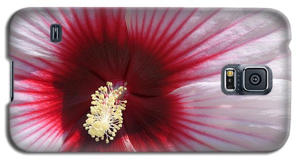 Galaxy S5 Case featuring the photograph Hibiscus-callaway Gardens by Mountains to the Sea Photo