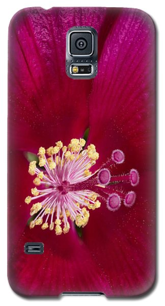 Galaxy S5 Case featuring the photograph Hibiscus Close Up - Phone Case Design by Gregory Scott