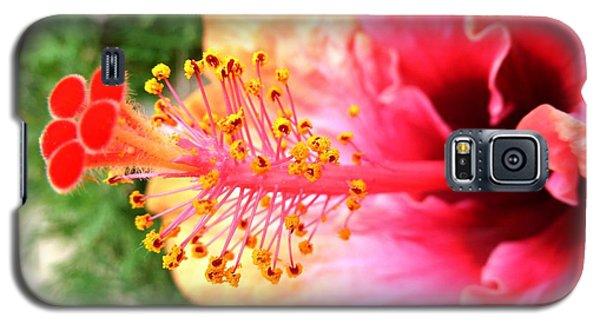 Hibiscus Flower Galaxy S5 Case by Julia Ivanovna Willhite
