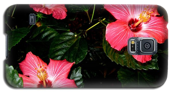 Galaxy S5 Case featuring the photograph Hibiscus Flowers by Oksana Semenchenko