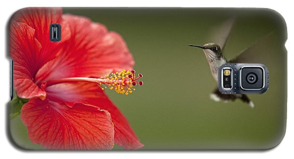 Hibiscus Hummingbird Galaxy S5 Case