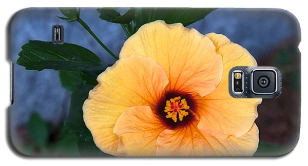 Hibiscus In Fading Light Galaxy S5 Case by Vinnie Oakes