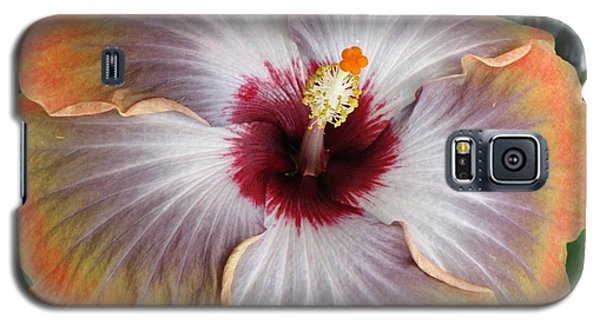 Hibiscus  Galaxy S5 Case by Jennifer Wheatley Wolf