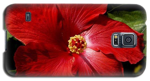 Hibiscus Landscape Galaxy S5 Case
