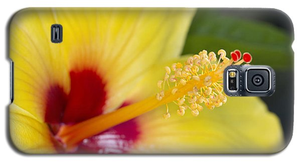 Hibiscus Macro Galaxy S5 Case by Robert Camp