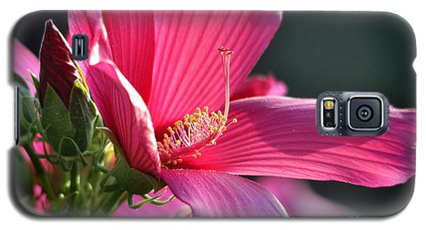 Galaxy S5 Case featuring the photograph Hibiscus Morning Bright by Nava Thompson