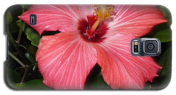 Galaxy S5 Case featuring the photograph Hibiscus by Oksana Semenchenko