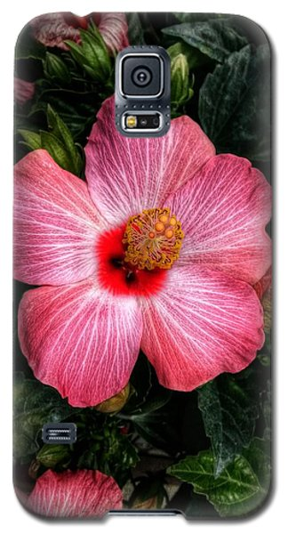 Hibiscus Sunset Galaxy S5 Case