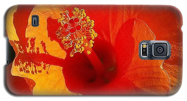 Galaxy S5 Case featuring the photograph Hibiscus by Suzanne Silvir