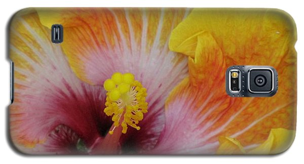 Galaxy S5 Case featuring the photograph Hibiscus by Tam Ryan