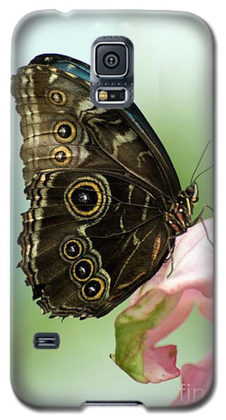 Galaxy S5 Case featuring the photograph Hidden Beauty Of The Butterfly by Debbie Green
