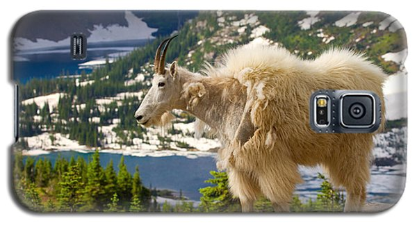 Galaxy S5 Case featuring the photograph Hidden Lake Goat by Aaron Whittemore