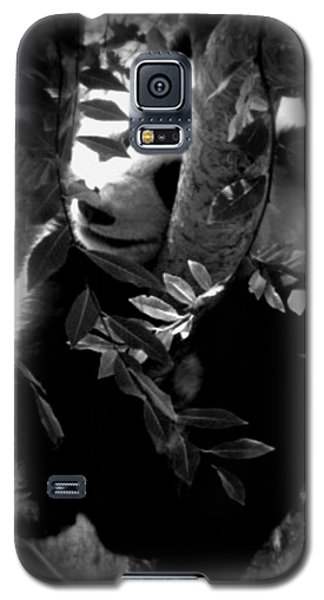 Galaxy S5 Case featuring the photograph Hidden Panda by Amanda Eberly-Kudamik