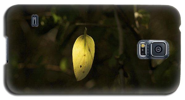 Galaxy S5 Case featuring the photograph Hidden Treasure - Yellow Leaf Art Print by Jane Eleanor Nicholas
