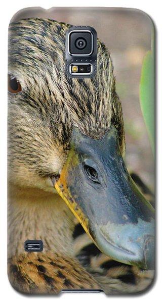 Hide And Seek Galaxy S5 Case by Tiffany Erdman