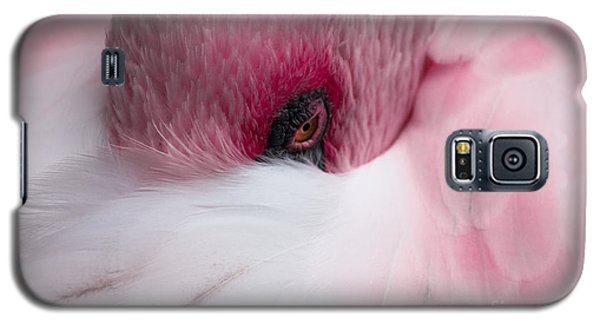 Hiding Flamingo Galaxy S5 Case