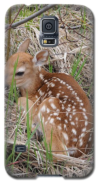 Galaxy S5 Case featuring the photograph Hiding In Plain Sight by Sandra Updyke